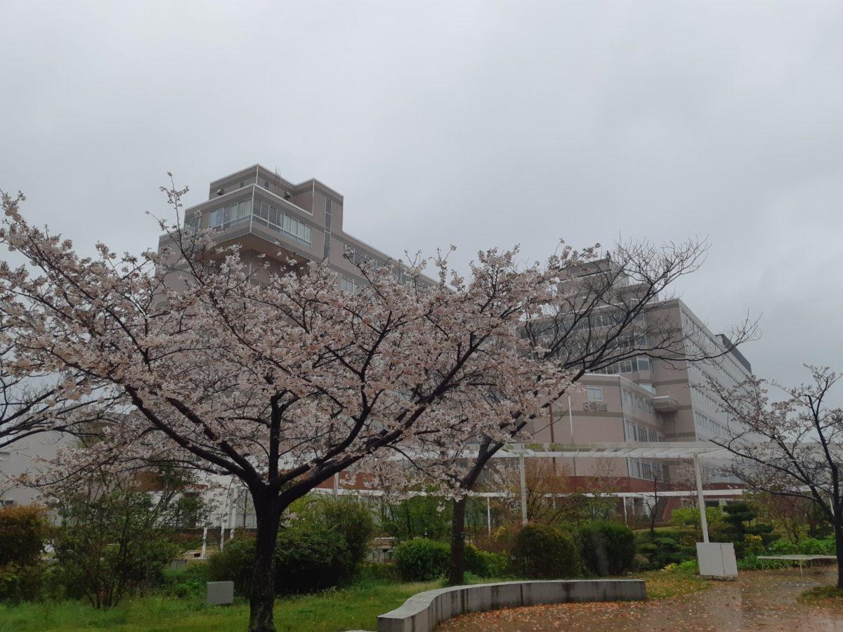 九州産業大学 入学式